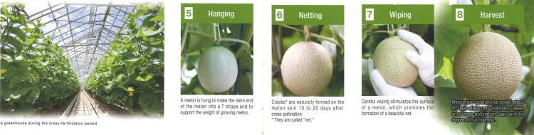 melon-process