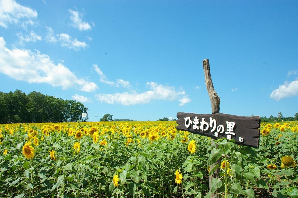 Hokuryu_town_Sunflower_field