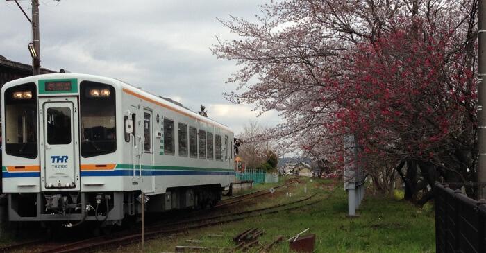 train with sakura