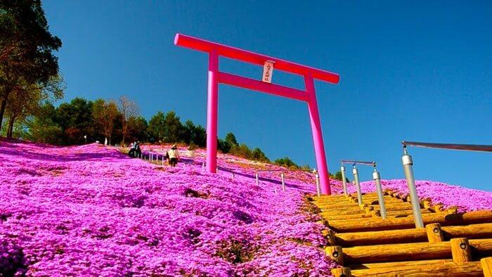 higashimokoto-shiba-zakura-park-pink-torii