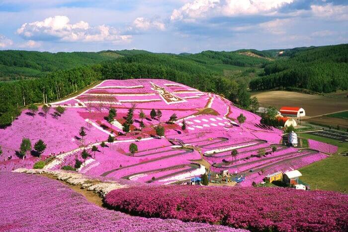 เปลี่ยนโลกให้เป็นสีชมพูกับดอกชิบะซากุระที่ Higashimokoto Park ฮอกไกโด