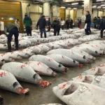 TSUKIJI WONDERLAND การอำลาครั้งสุดท้ายของสุดยอดตลาดปลาระดับโลก