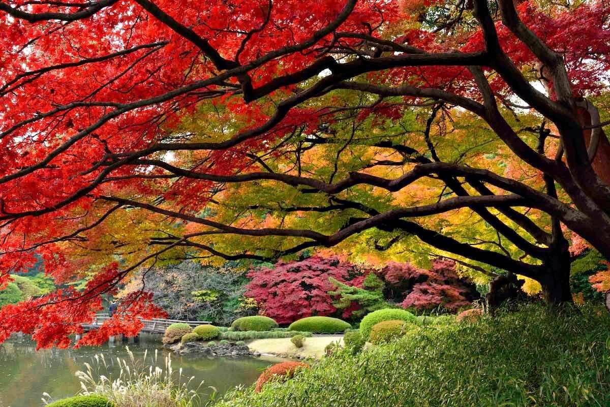 สะพายกล้องท่องญี่ปุ่น มาดู 10 ที่เที่ยวในญี่ปุ่นที่ถ่ายรูปยังไง๊ยังไงก็สวย
