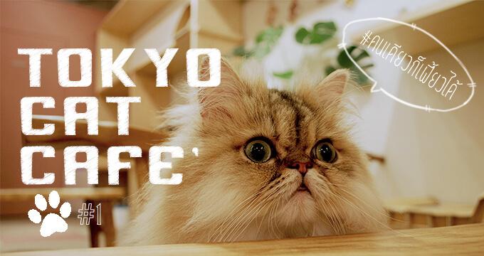 10 อันดับ คาเฟ่แมวในโตเกียวไปคนเดียวก็เฟี้ยวได้ Part 1