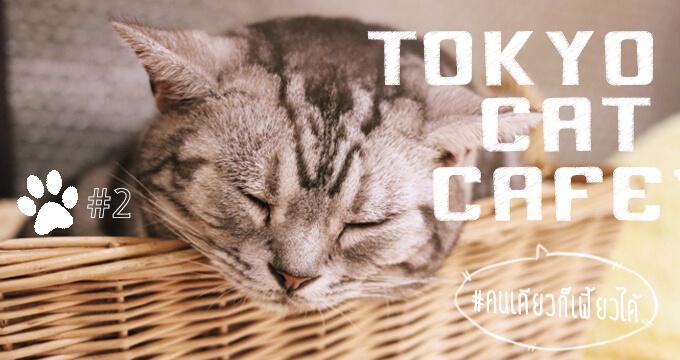 10 อันดับ คาเฟ่แมวในโตเกียวไปคนเดียวก็เฟี้ยวได้ Part 2