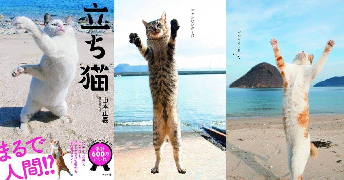 คอลเลคชั่นภาพถ่ายแมวยืนสุดเก๋ ของ Masayoshi Yamamoto