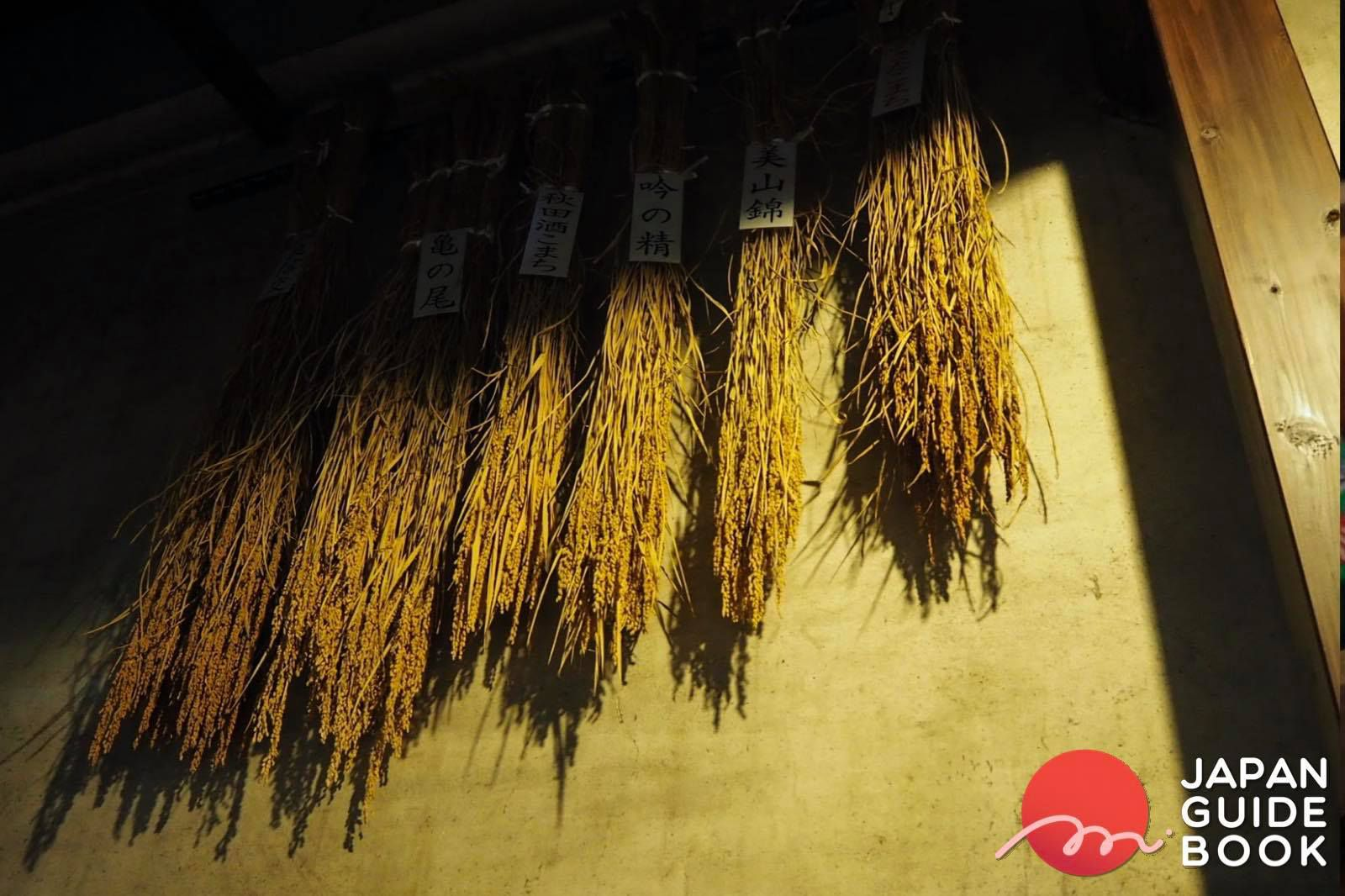 พันธุ์ข้าวที่นำมาทำนิฮงชู