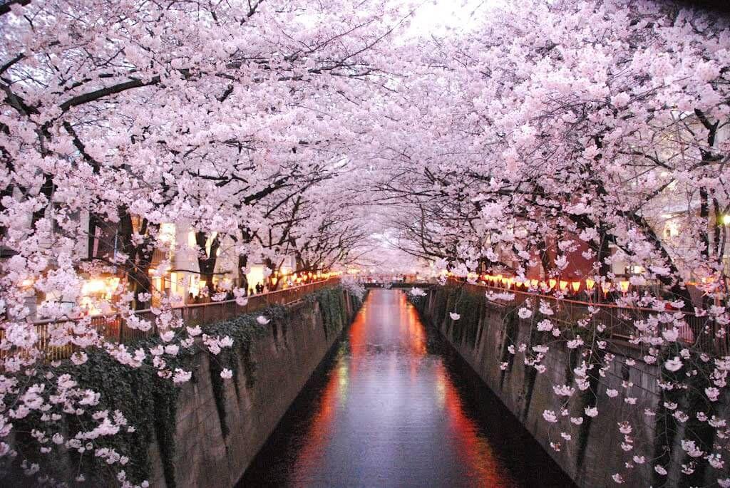 10 สถานที่ 10 งานเทศกาลชมซากุระในโตเกียว [อัพเดท 2020]