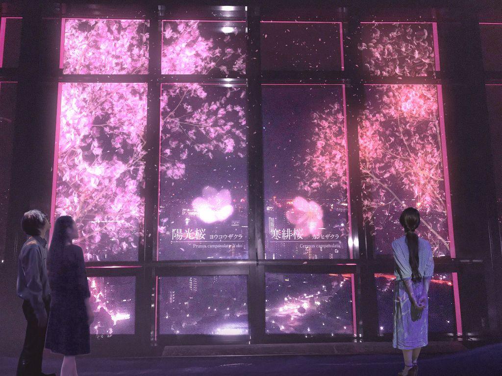 ชมซากุระบน Tokyo Tower ในรูปแบบ Projection Mapping