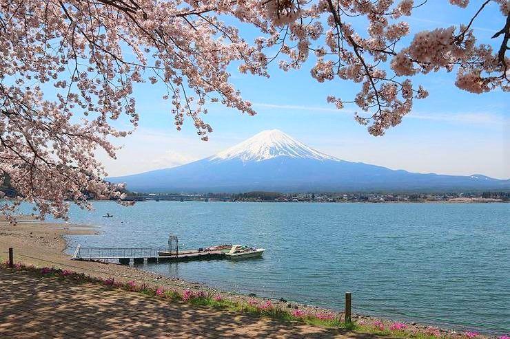 7 จุดชมซากุระ พร้อมวิวฟูจิซัง รอบๆ ทะเลสาบ Kawaguchiko