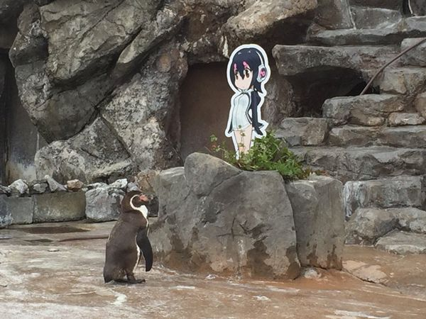 penguin-japan