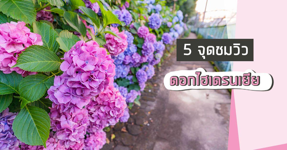 5 จุดชมวิวดอกไฮเดรนเยียเเละเทศกาลอะจิไซ ช่วงฤดูฝน