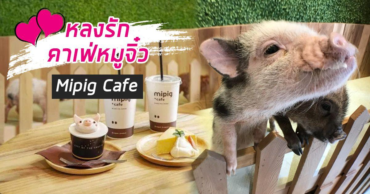[รีวิว] หลงรักเจ้าหมูจิ๋วที่คาเฟ่ mipig cafe ณใจกลางย่านเมกุโระ