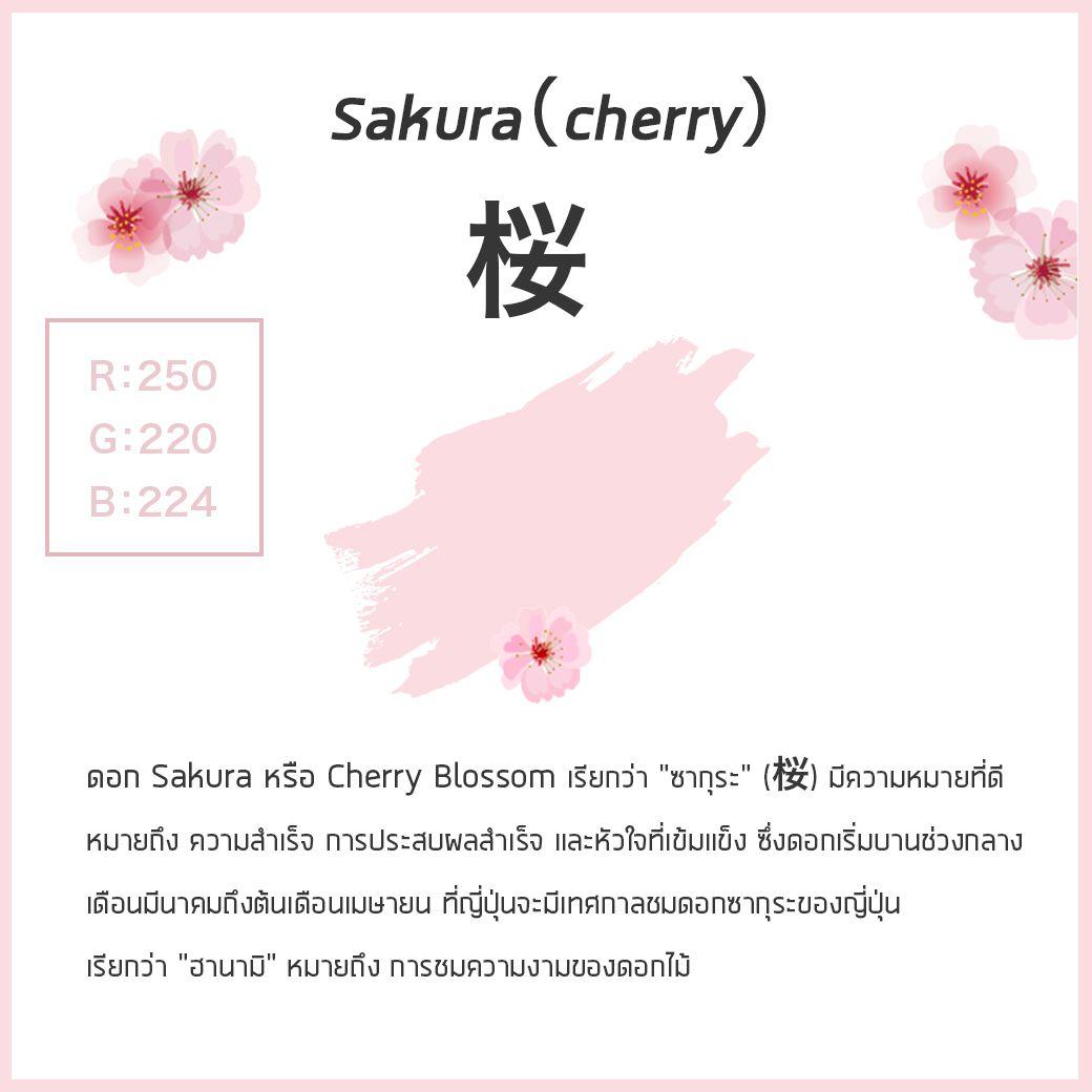 """ดอก Sakura หรือ Cherry Blossom เรียกว่า """"ซากุระ"""" (桜)"""