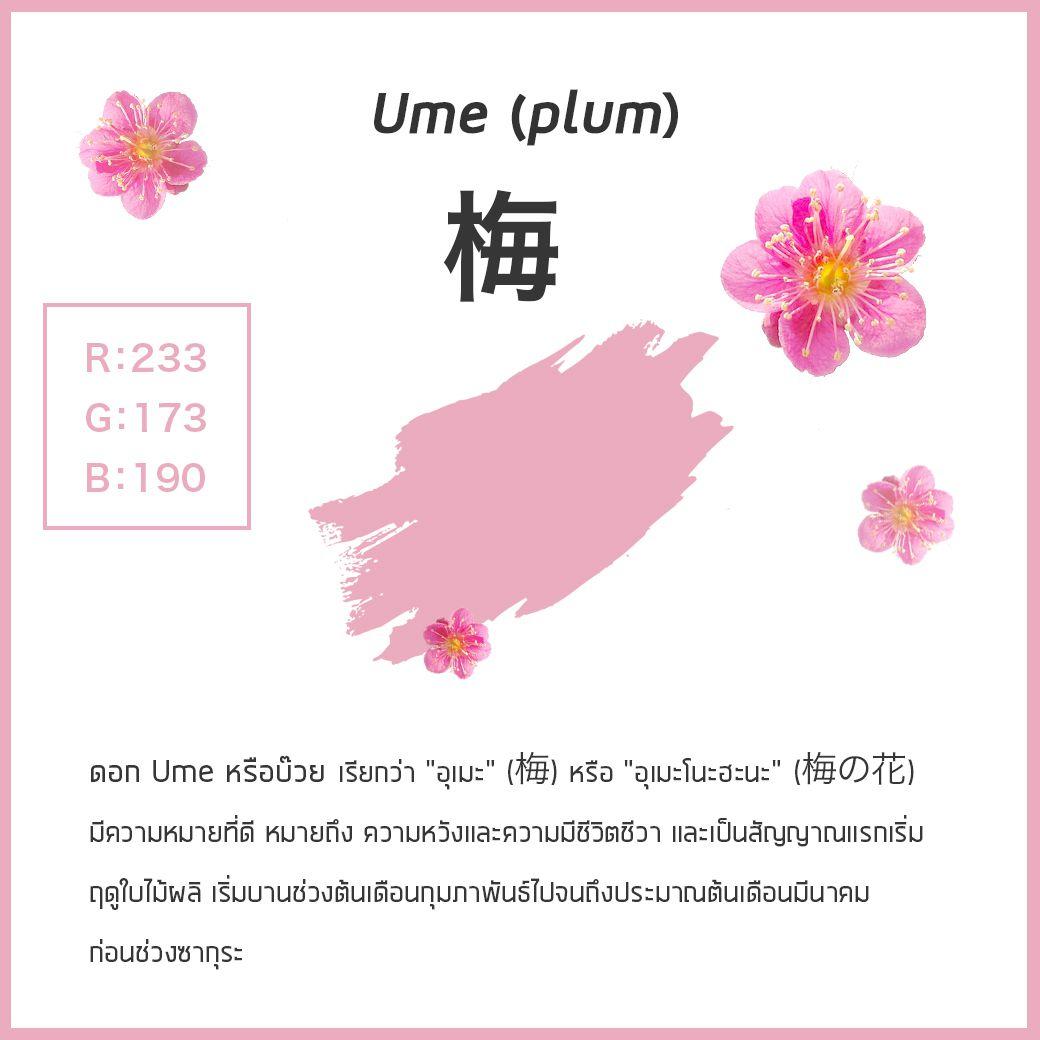 """ดอก Ume หรือบ๊วย เรียกว่า """"อุเมะ"""" (梅)"""