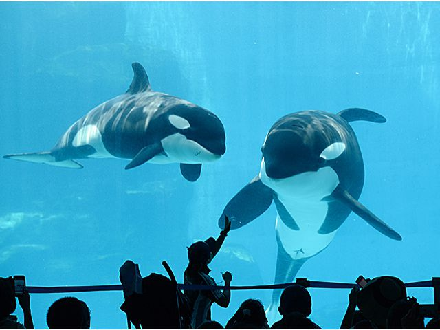 พิพิธภัณฑ์สัตว์น้ำท่าเรือนาโกย่า (Port of Nagoya Public Aquarium) | ที่เที่ยว นาโกย่า (Nagoya)