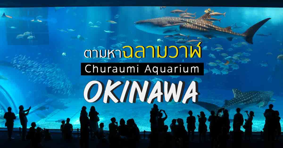 Churaumi-Aquarium,-Okinawa