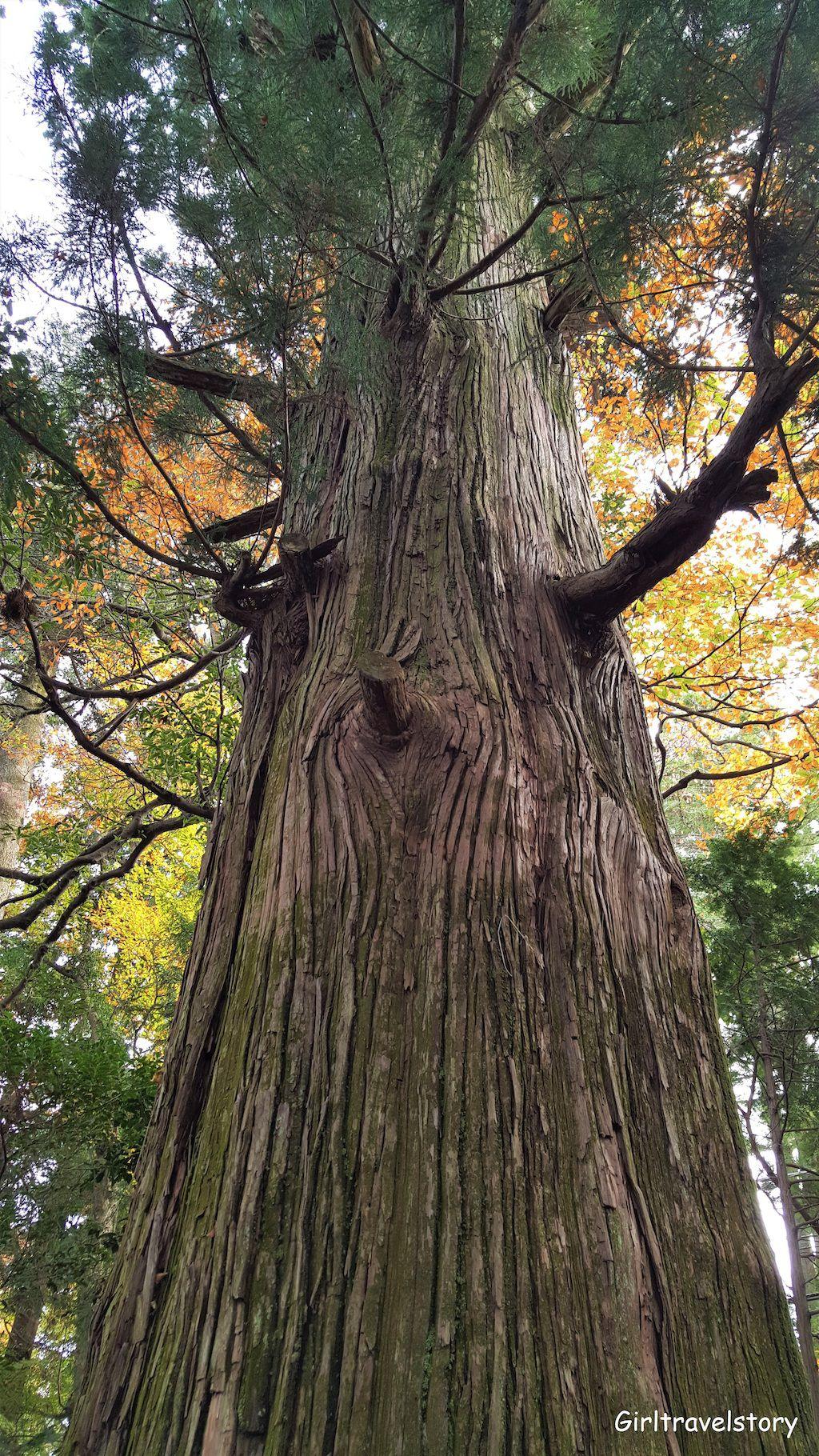 เคเบิลคาร์ญี่ปุ่น ชมใบไม้เปลี่ยนสี ที่ Mt.Takao ใกล้โตเกียว แถมได้ดูฟูจิซังด้วย