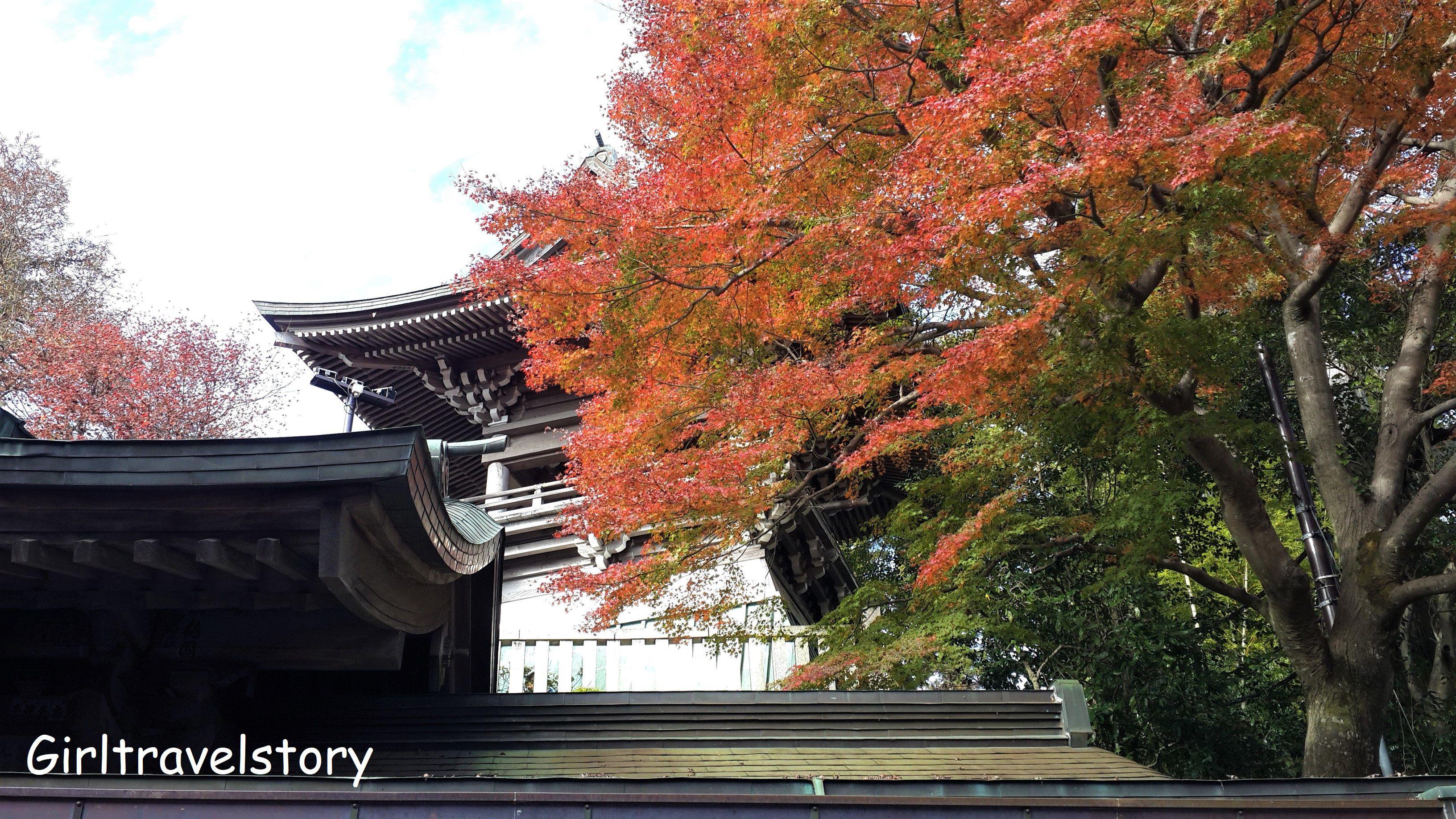 ชมใบไม้เปลี่ยนสี ที่ Mt.Takao