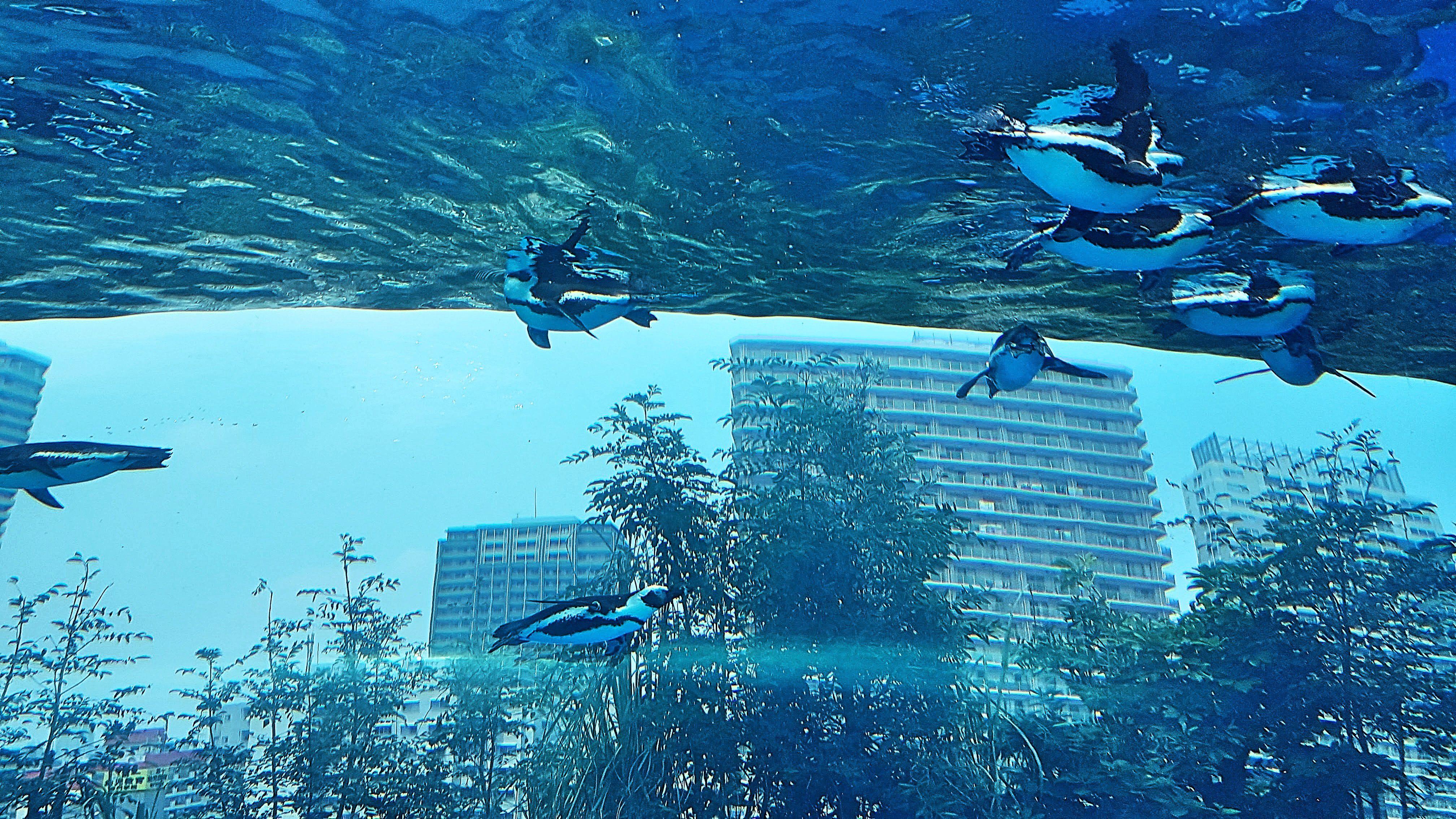 รีวิวพิพิธภัณฑ์สัตว์น้ำซันไชน์(Sunshine Aquarium)
