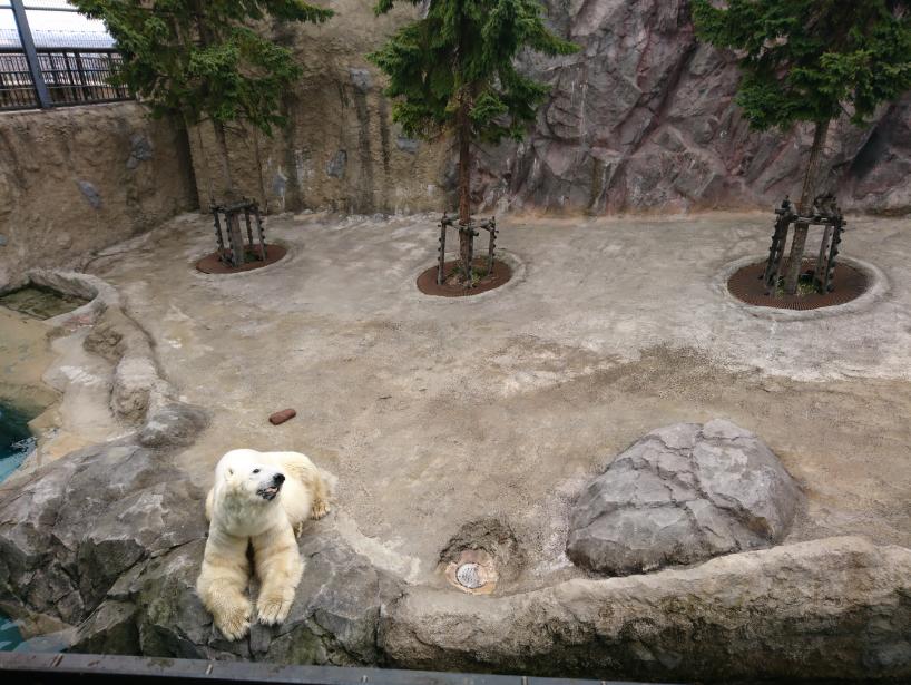 สวนสัตว์อะซาฮิยาม่า (Asahiyama Zoo) เพนกวิน