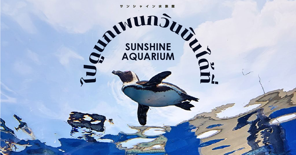 ไปดูนกเพนกวินบินได้ที่ Sunshine Aquarium