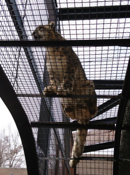 สวนสัตว์อะซาฮิยาม่า (Asahiyama Zoo) ส่องสัตว์ รีวิวพาลูกเที่ยวญี่ปุ่น