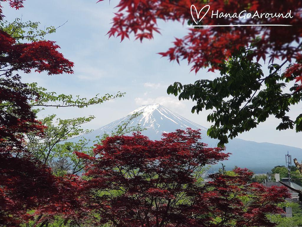 จุดชมวิวบริเวณเจดีย์ชูเรโต (Chureito Pagoda) ที่เมืองฟูจิชิโยดะ (Fujishiyoda)ในจังหวัดยามานาชิ (Yamanashi)
