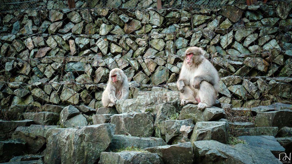 อุทยานลิงเเช่น้ำพุร้อนที่ญี่ปุ่น
