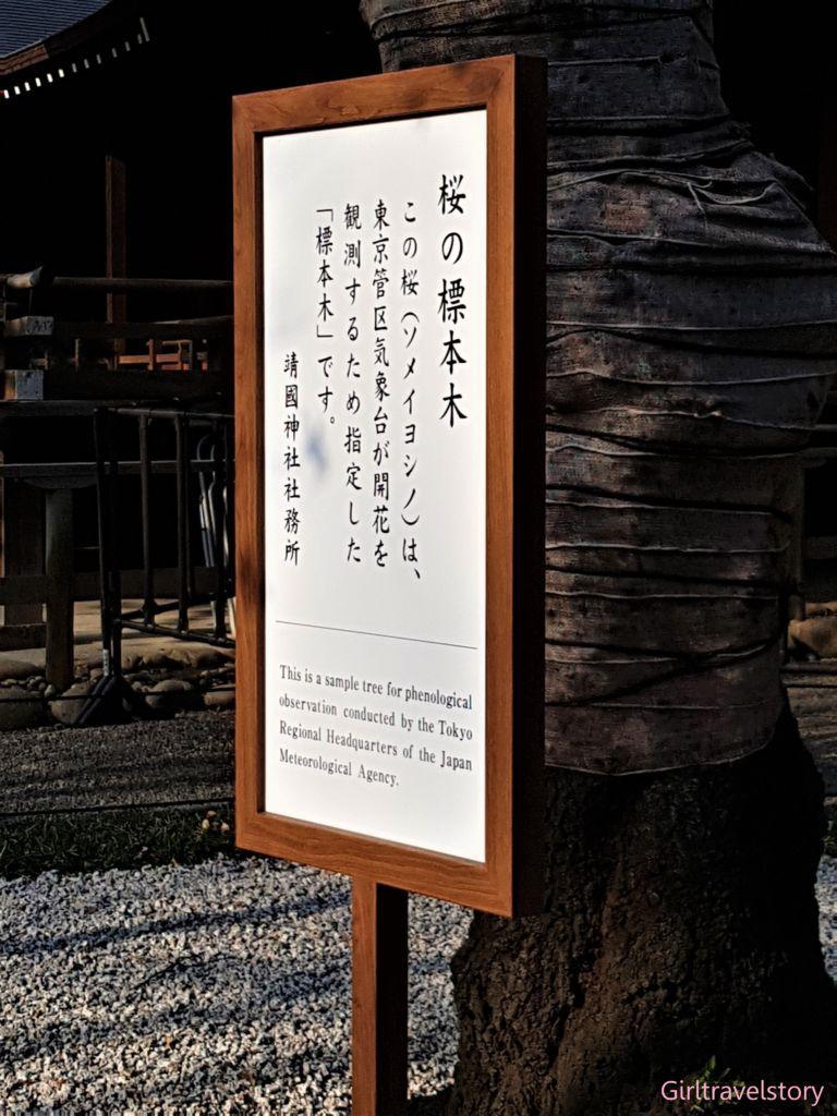 Sakura ต้นซากุระพยากรณ์โซนโตเกียว บริเวณศาลเจ้า Yasukuni Shrine