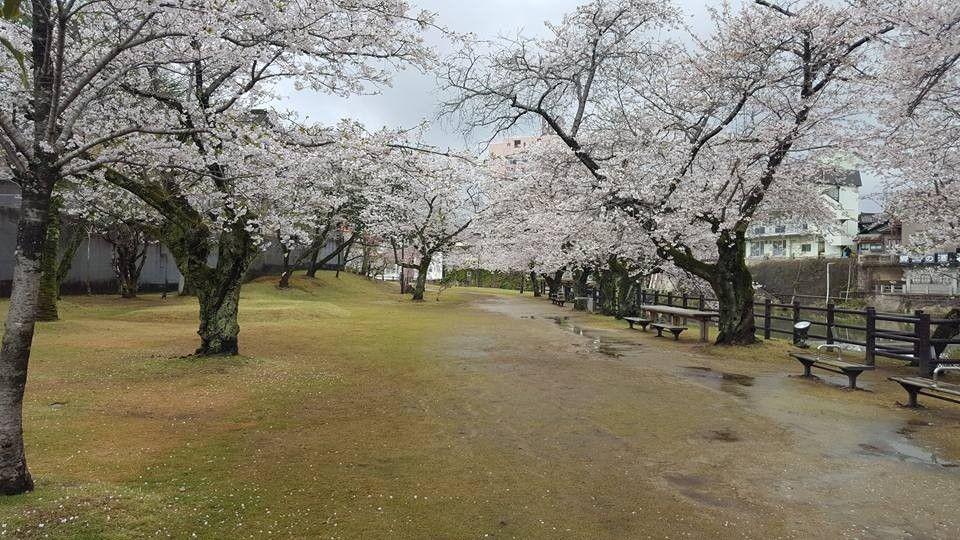 ซากุระบานที่สวนสาธารณะออนเซ็น จังหวัดซากะ