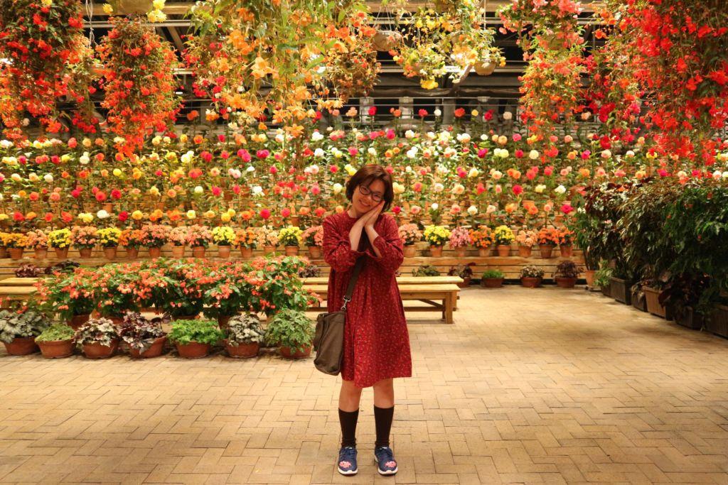 ดอกไม้ในเรือนเพาะที่สวนนาบะนะ ซาโตะ เมืองนาโกย่า ในภูมิภาคคันไซ