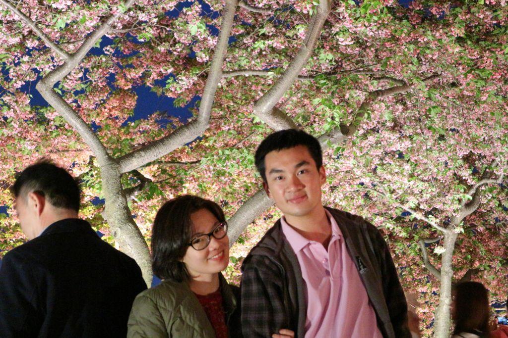 ชมดอกซากุระบานยามค่ำคืนที่สวนนาบะนะ ซาโตะ เมืองนาโกย่า ในภูมิภาคคันไซ