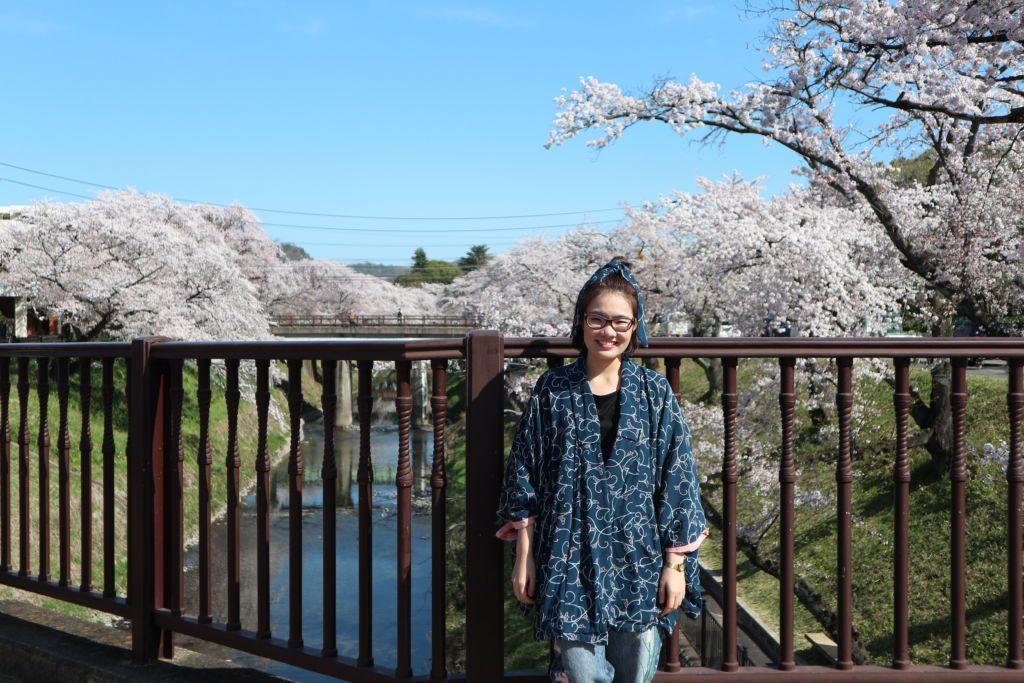 ดอกซากุระบานที่แม่น้ำซาไก ของเมืองกิฟุ ในภูมิภาคคันไซ