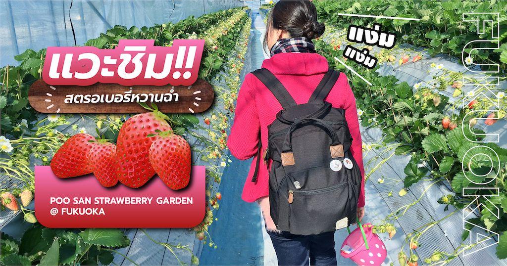 แวะชิม!! สตรอเบอรี่หวานฉ่ำที่ Poo San Strawberry Garden @ Fukuoka