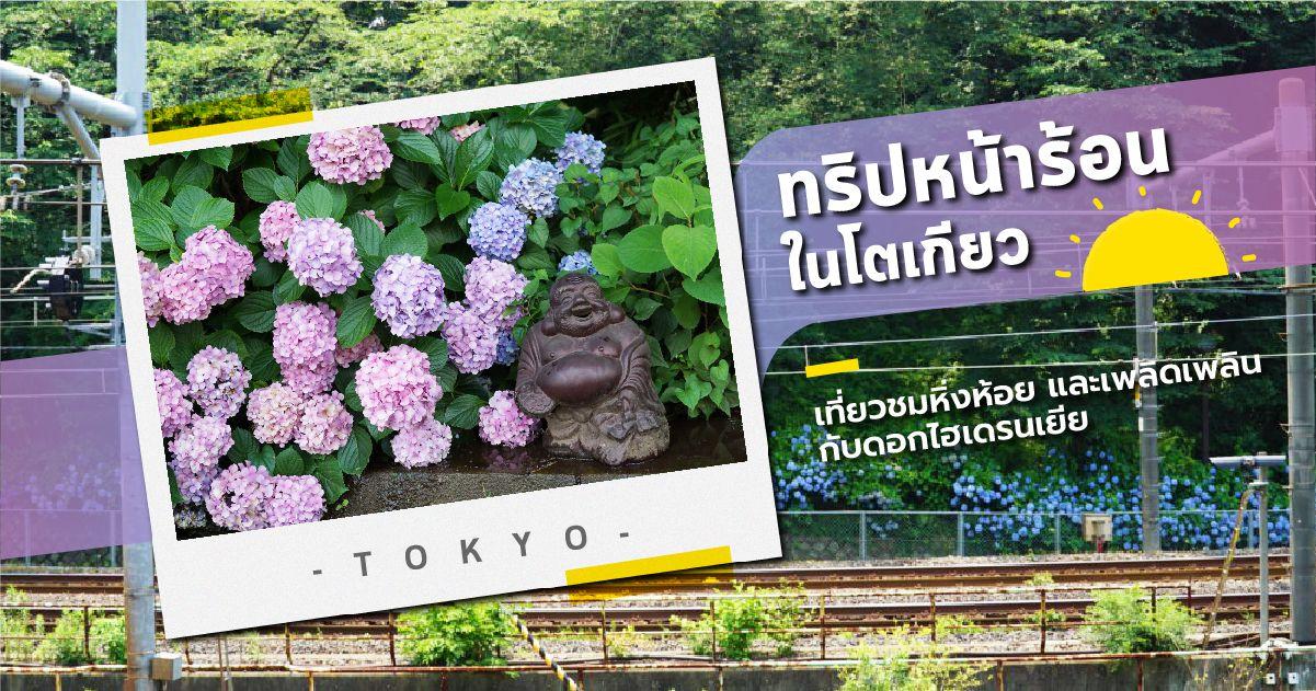 ทริปหน้าร้อนในโตเกียว เที่ยวชมหิ่งห้อยและเพลิดเพลินกับดอกไฮเดรนเยีย