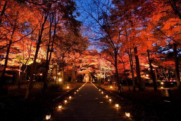 จุดชมวิวใบไม้เปลี่ยนสี ที่คารุอิซาวะ(Karuizawa) นากาโน่(Nagano)