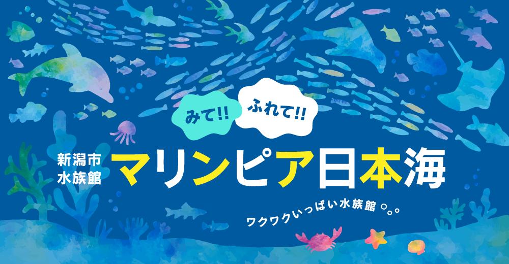 นากทะเล Idol แห่งพิพิธภัณฑ์สัตว์น้ำ