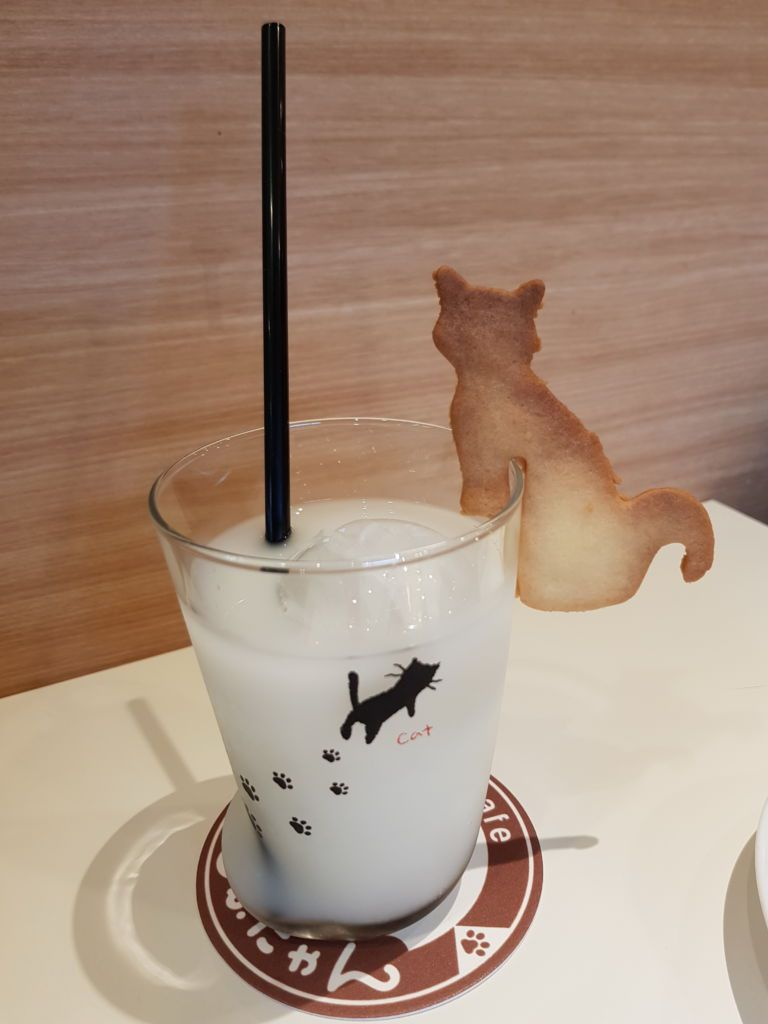 คาเฟ่แมวขาสั้น โมฟุเนี๊ยง โตเกียว