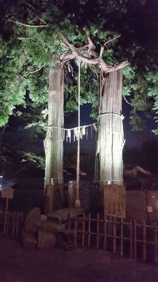 ต้นการบูรยักษ์ ศาลเจ้าทาเคะโอะ จังหวัดซากะ