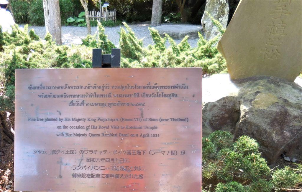 ต้นสนที่ร.7 เคยปลูกไว้ ที่วัดโคโตคุอิน
