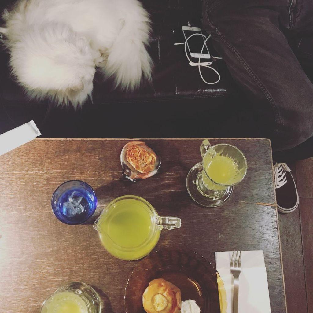 อาหารและเครื่องดื่มในคาเฟ่แมว Catteria Cloud Nine ที่ Osaka