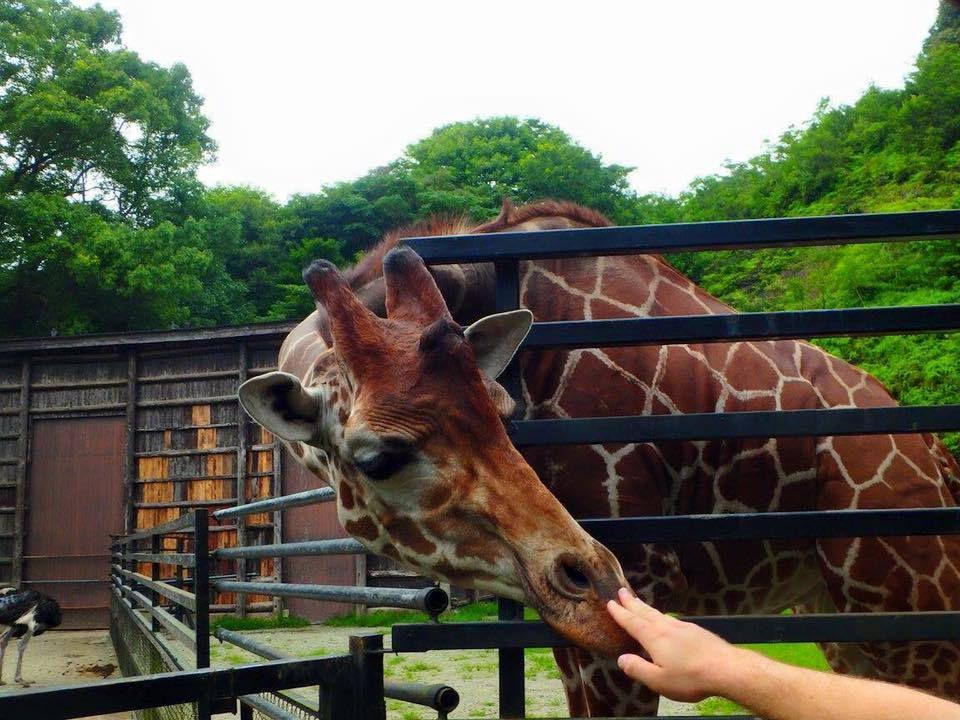 สวนสัตว์ Bio Park เมืองซาเซโบะ