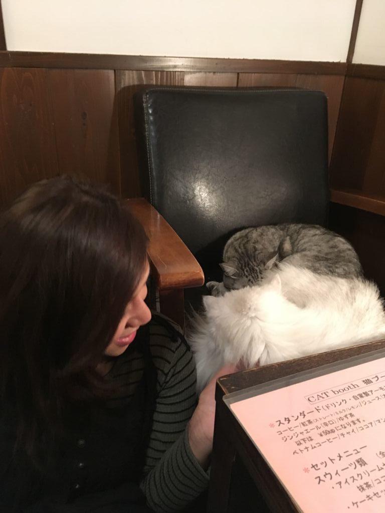 คาเฟ่แมว Catteria Cloud Nine ที่ Osaka