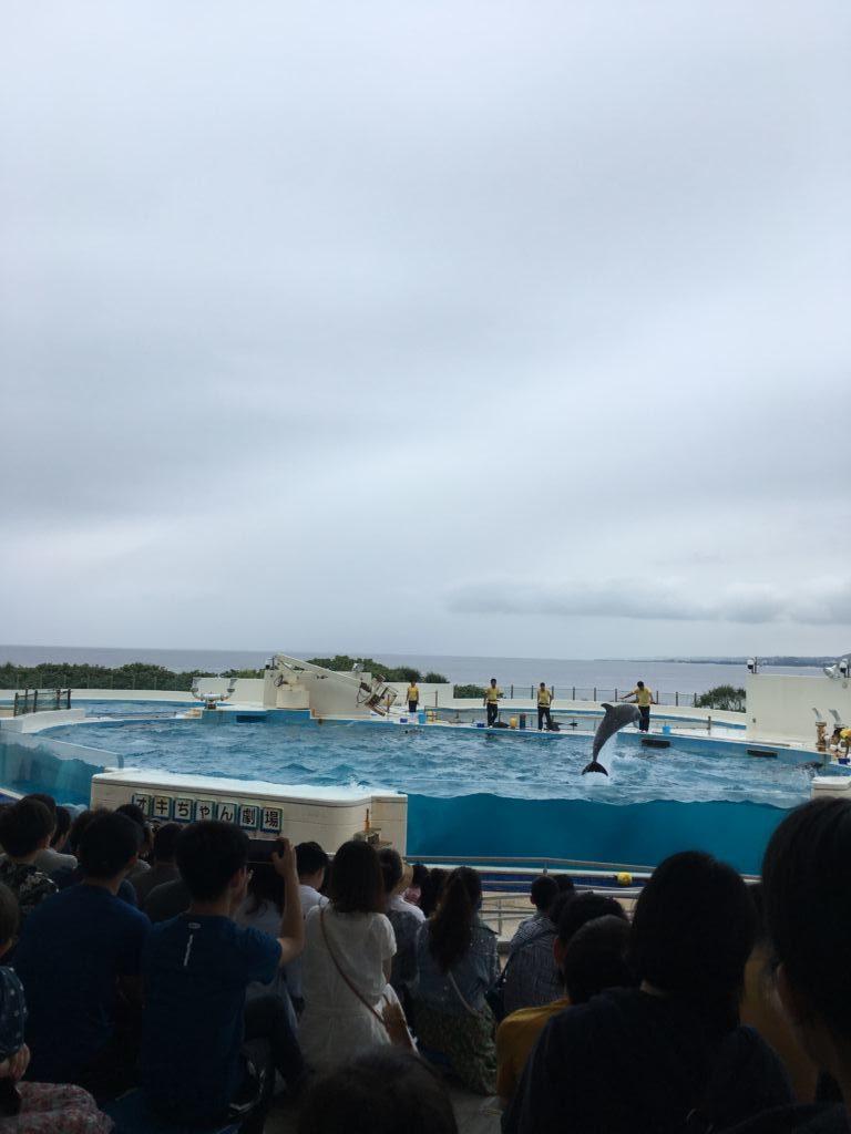 โชว์โลมา Okinawa Churaumi Aquarium โอกินาว่า