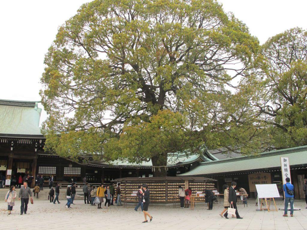 ต้นไม้สำหรับแขวนคำขอพร วัดเมจิ ย่านฮาราจูกุ โตเกียว