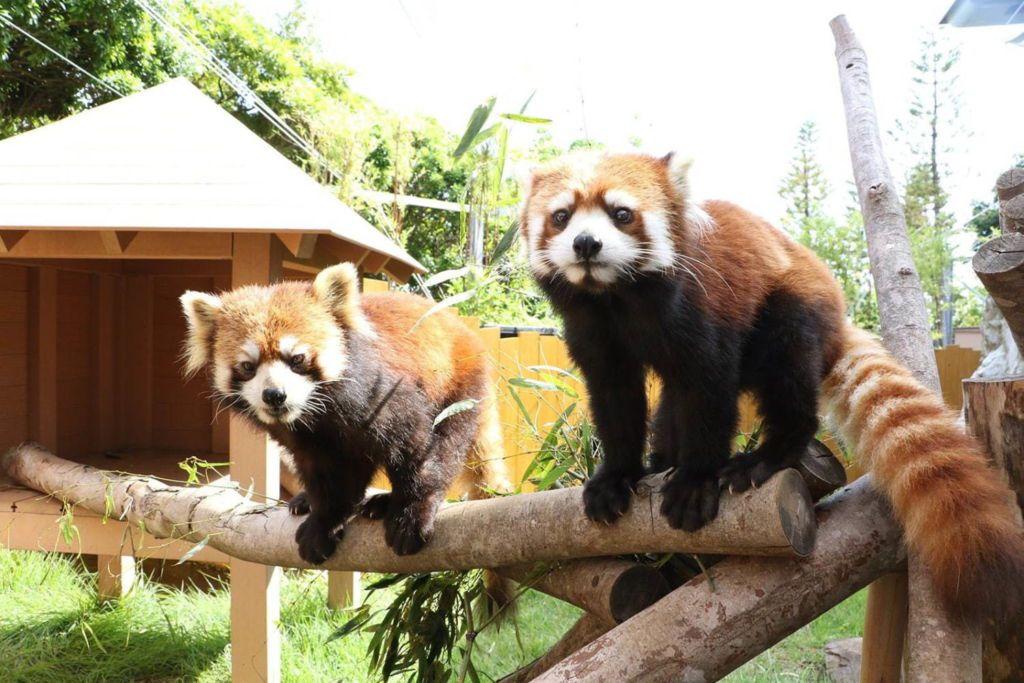 พิพิธภัณฑ์สัตว์น้ำ Sea Paradise จัดกิจกรรมวันฮาโลวีน ชวนชมการแสดงจากเหล่าสัตว์น้อยน่ารักและดอกไม้ไฟสุดอลังการ