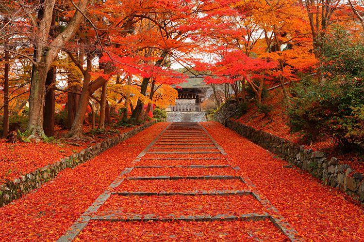 15 จุดชม Momiji ที่เกียวโตในฤดูใบไม้ร่วง