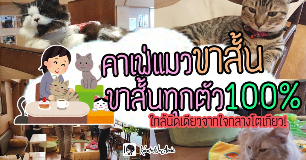 คาเฟ่แมว โตเกียว แมวขาสั้น