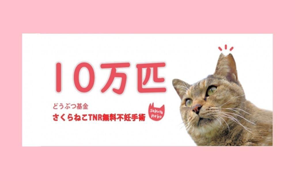 ไปเที่ยวญี่ปุ่นเคยเจอมั้ย? เจ้าแมวเหมียว หูกลีบซากุระ (SAKURA CAT)